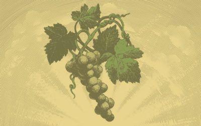 ¿SABÍAS QUE… la variedad Moscatel de Grano Menudo es la más aromática que existe?